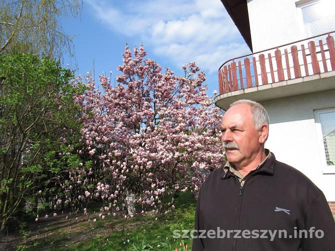 Waldemar Poździk z kwitnącą magnolią na drugim planie. Fot. Tomasz Gaudnik