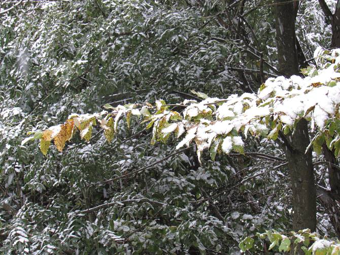 Śnieg 12 października 2015 r. Foto : Tomasz Gaudnik