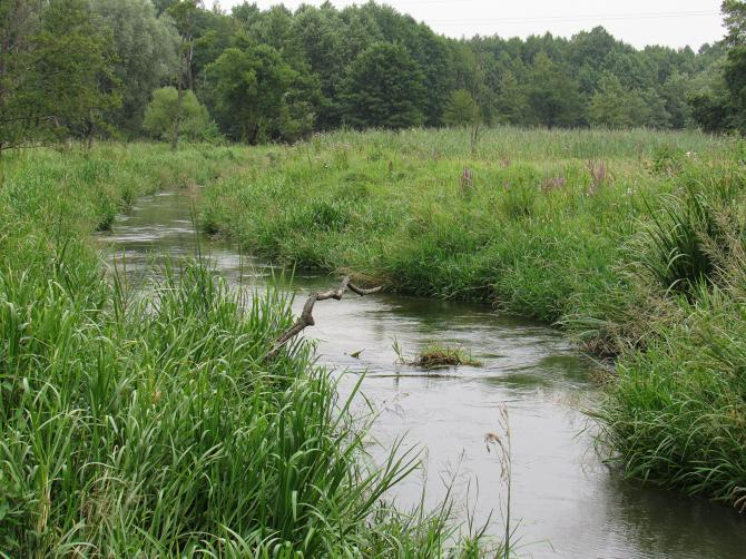 Rzeka Wieprz w Szczebrzeszynie. Foto: Tomasz Gaudnik